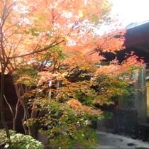 庭園の紅葉、見ごろは例年10月頃です。