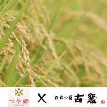 【つや姫】古窯では山形のブランド米「つや姫」をご提供しています。