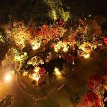 紅葉の夜のライトアップ