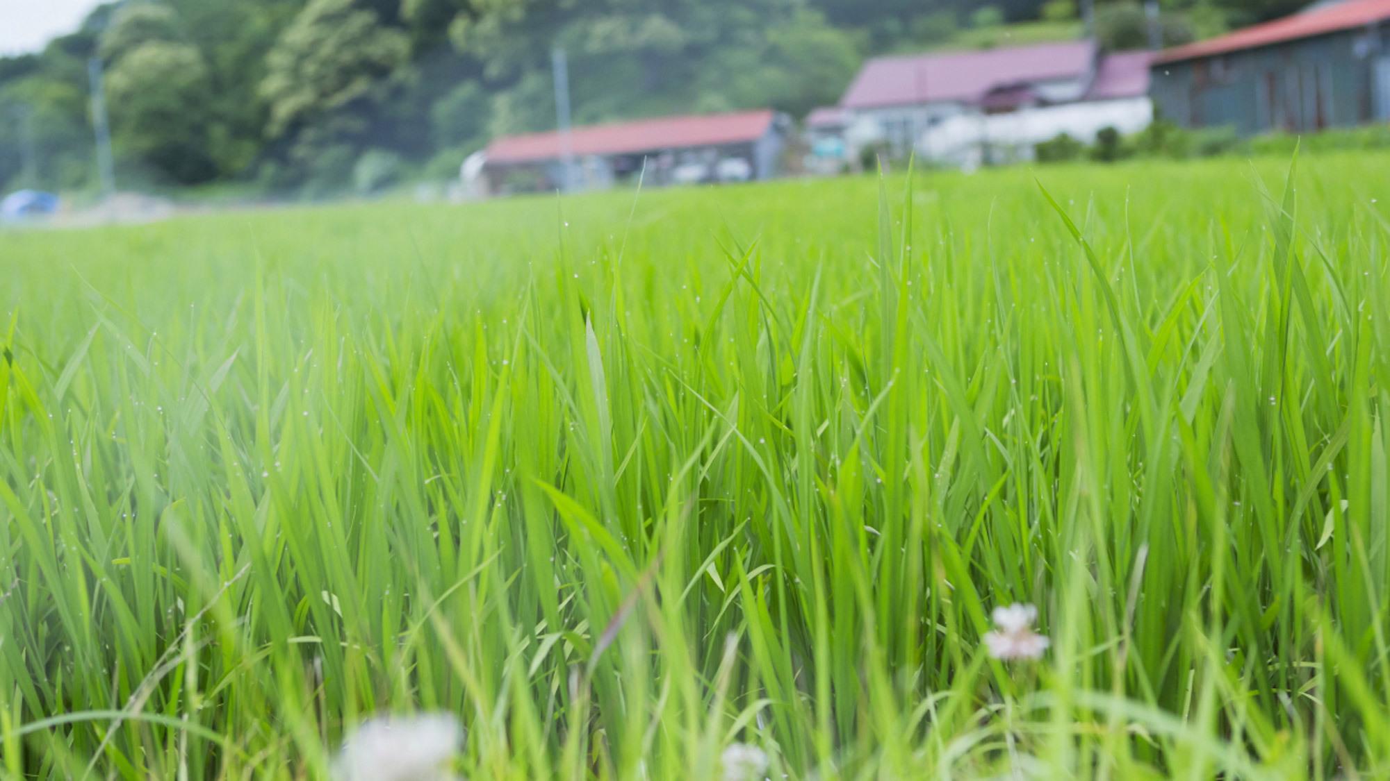 日高の豊かな食材たち【お米】