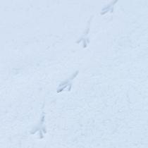 ハイジアの雪景色