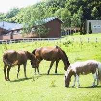 山々と緑、そして馬たちを眺めながら癒されるひととき