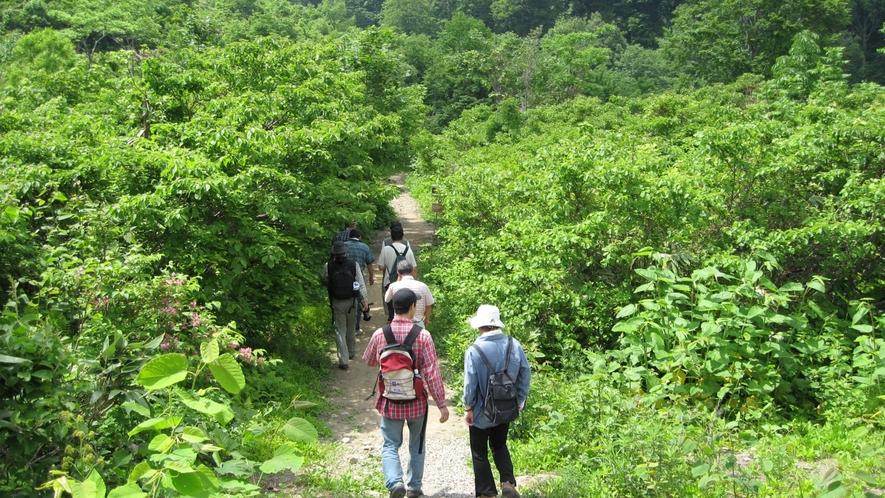 人気の塩の道ハイキングもオススメです。 (2)