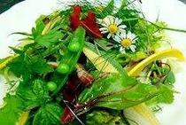 高原野菜のサラダ