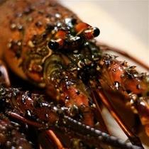 【厳選素材】 *相模湾で獲れた鮮度の高い伊勢海老は、刺身で食べると絶品です。