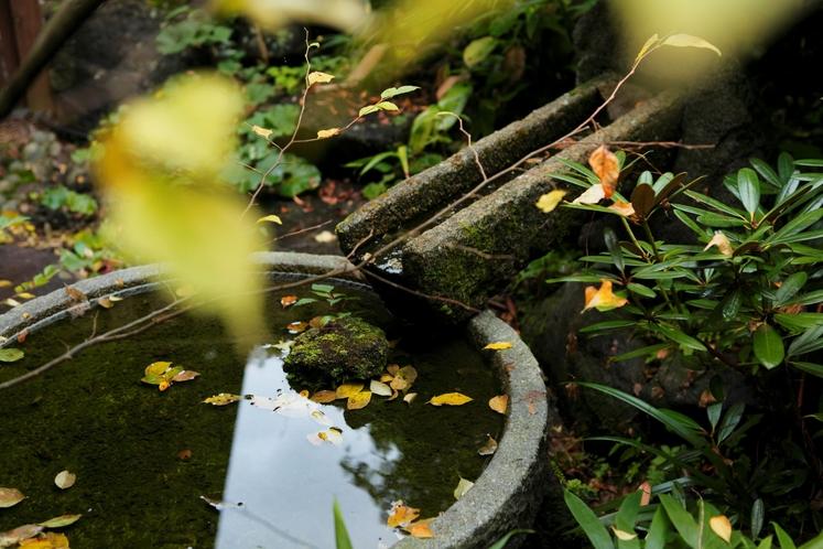 玄関前の水盤