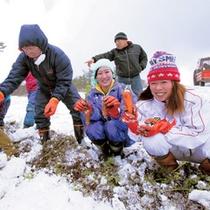 雪人参収穫体験