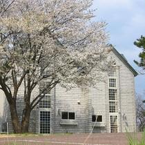 コテージと桜