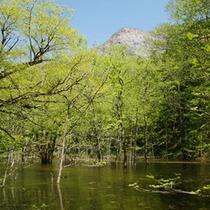 四五郎の池