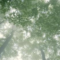 霧の森にて