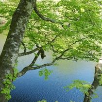 牛蒡(ごぼう)の池