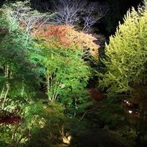 幻想的な紅葉のライトアップ