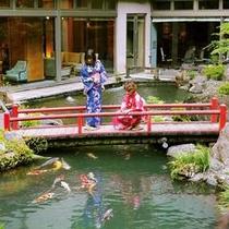 当館庭園の池には多数の鯉が泳いでおります。