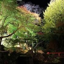 庭園のライトアップ(紅葉シーズン)