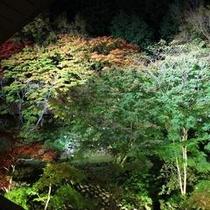 ライトアップされた庭園(秋シーズン)