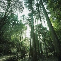 〜SORA庭園内の森林〜 自然界と向かい合った癒しの場所