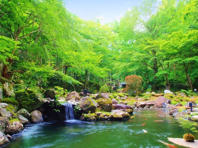 1万5千坪の敷地にある日本庭園(新緑イメージ)