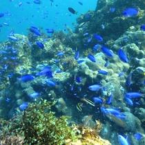 ■ヒリゾ浜(色とりどりの魚)
