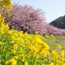 ■みなみの桜まつりと菜の花まつり1