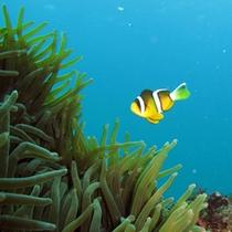 ■ヒリゾ浜(綺麗な魚)
