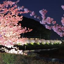 ■2月開花のみなみの夜桜