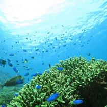 ■ヒリゾ浜海中にはたくさんの魚!