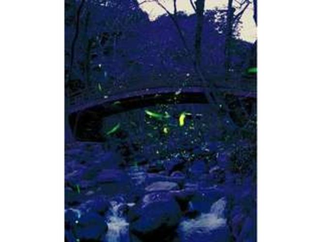 熱海梅園で毎年6月上旬だけ行われる「ほたる観賞の夕べ」