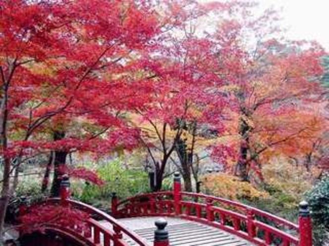 毎年11月下旬から112月中旬に見ごろを迎える梅園もみじまつり