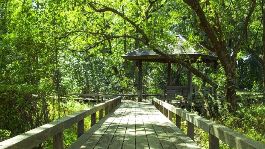 ★裏にはケヤキの森の散歩道。マイナスイオンがたっぷり!
