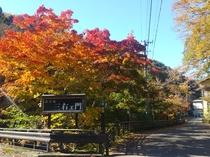 台温泉の紅葉風景