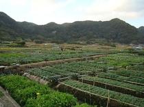 七浦花畑2012-1