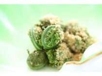 山菜(一例)