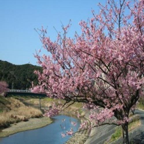 さくら祭り 2月10日〜3月10日 下賀茂の湯の花売店近くに無料の足湯もあります。