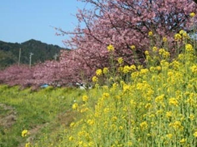 2月、3月頃の青野川沿いの桜 イベント会場にて宿泊のお客様に甘酒サービスあり。宿に引換券あります。ご利用ください。2月5日〜3月10日まで)