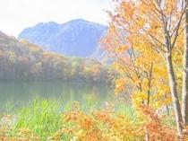 丸池の紅葉 例年10月10日前後が見頃となります。