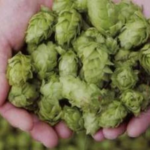 生ホップ志賀高原ビールの原料です。