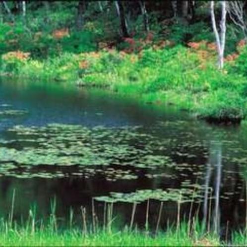 蓮池湖畔の新緑