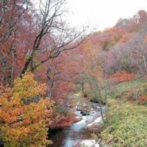 雑魚川渓谷の紅葉