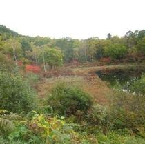 一沼付近の紅葉