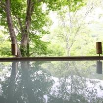 木々が白い温泉に映し出される