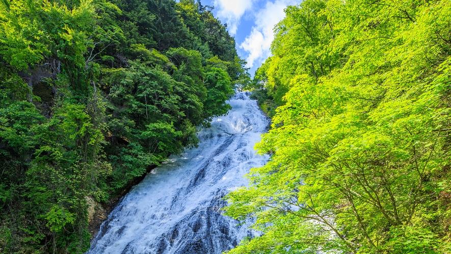 **【湯滝】湯ノ湖の南端、溶岩流の岩壁から湖水が流れ落ち、滝壺からは迫力ある姿を眺められます。