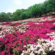 鯖江市の西山公園