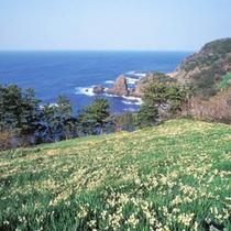 冬の景勝地・越前岬