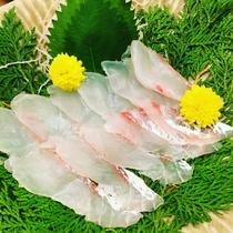 ディナーメニュー「本日の鮮魚のお造里・五島列島の活〆天然鯛」