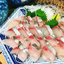 ディナーメニュー「本日の鮮魚のお造里・越前港の活〆縞鯵」