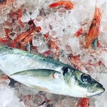 福井はもとより日本各地よりおいしい食材を集めて調理します。