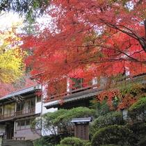 紅葉の見ごろは11月初旬~下旬。