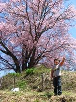 ワ-イ僕の桜だ