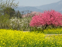 春は花盛り