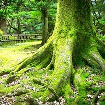 小堀遠州ゆかりの日本庭園
